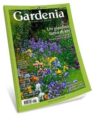 Gardenia April 2018