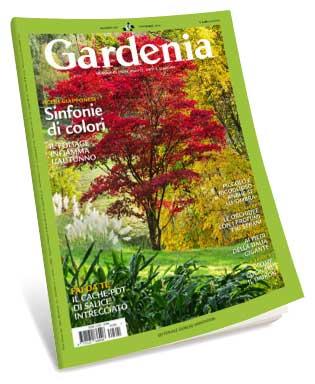 Gardenia November 2016