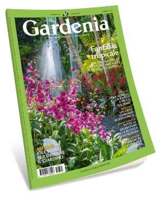 Gardenia July 2015