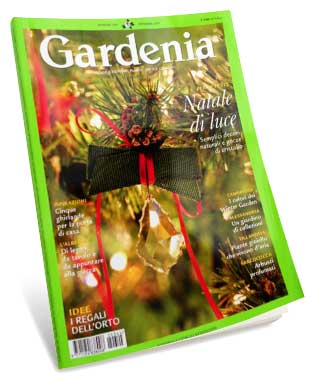 Gardenia dicembre 2012